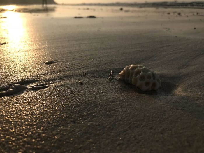 Beach Sand Animal Themes One Animal Animals In The Wild Nature Shore Animal Wildlife Wildlife No People Outdoors Hermit Crab Day Sea Sea Life Water Close-up Beauty In Nature Sea Turtle