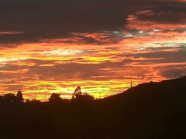 Tree Astronomy Sunset Silhouette Forest Fire Tree Area Orange Color Dramatic Sky Sky Landscape Capture Tomorrow