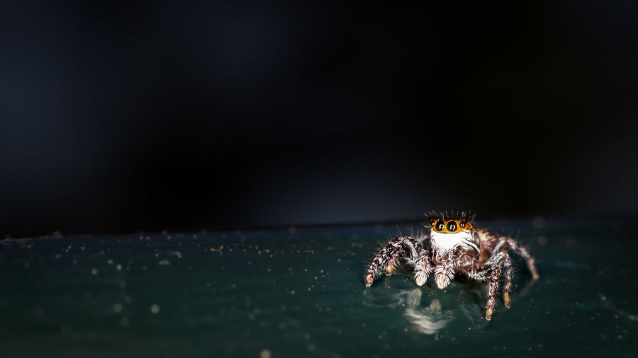 Close-Up Of Jumping Spider On Railing