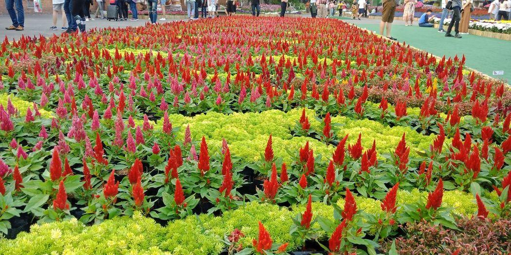 Red flowering plants in park