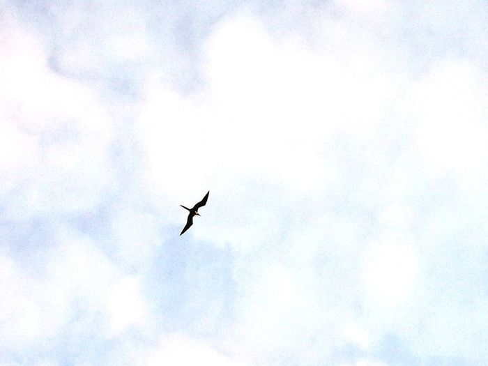 Flying Bird Animals In The Wild Animal Wildlife Sky One Animal Low Angle View Day Mid-air Outdoors Animal Themes No People Nature Beauty In Nature Spread Wings Bird Of Prey Vulture