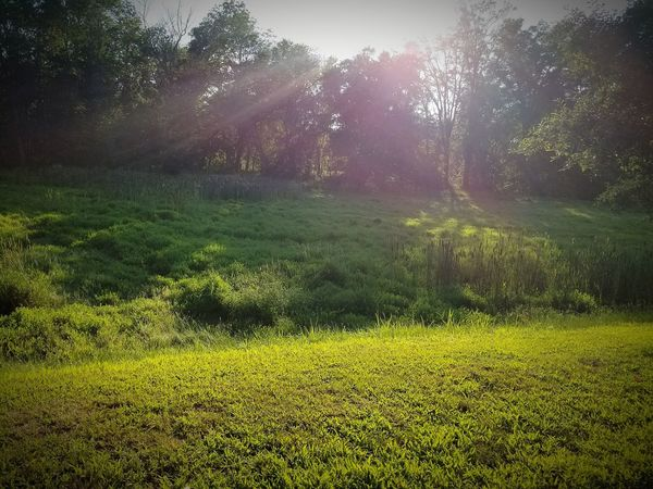 Grass Nature Beauty In Nature Green Color No People Field Growth Outdoors Tree Sunlight Tranquility Day Water Scenics Freshness Sky