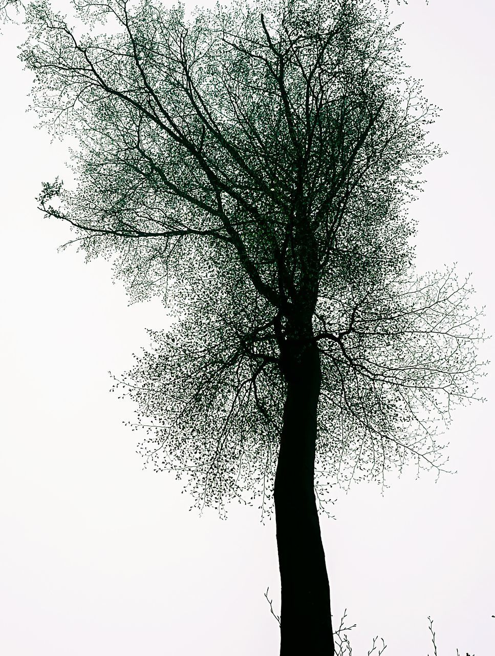 tree, branch, low angle view, growth, nature, tree trunk, clear sky, beauty in nature, tranquility, sky, outdoors, day, no people