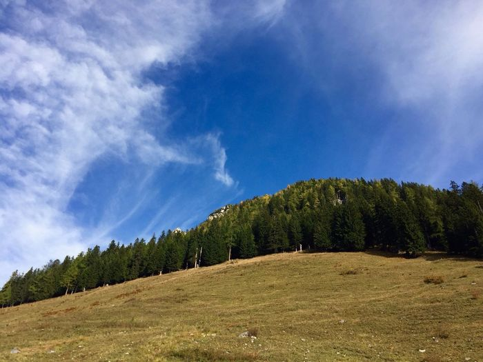 Low angle view of pine trees on mountain against blue sky