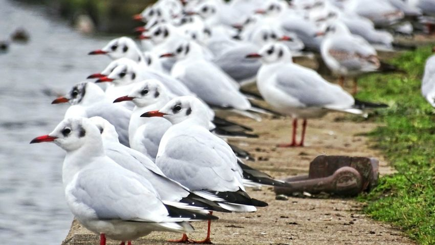 waiting... Birds Birds_collection Birds Of EyeEm  Riverside ByTheRiver White Gulls Gull Offenbach Am Main Showcase: January