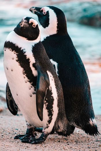 High angle view of penguins