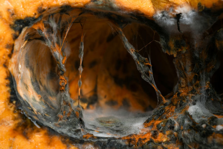 Close-up No People Nature Orange Color Outdoors Day Wood - Material Beauty In Nature Firewood Full Frame Backgrounds Motion Selective Focus Textured  Log Burning Autumn Animal Wood Solid Fungus Pumpkin Fiber Spider Cave