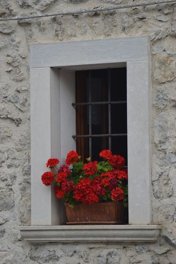 Flower Flowering Plant Window Plant Architecture Built Structure Building Exterior Nature Growth Day Building Wall - Building Feature Potted Plant Glass - Material Fragility Vulnerability  Freshness Red Outdoors No People