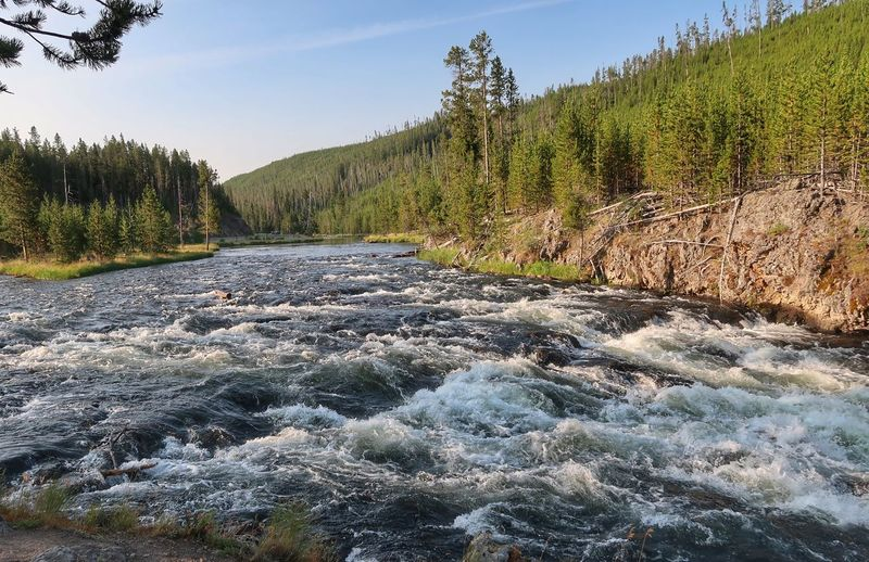 Landscape of river flowing through forested area in Yellowstone National Park Yellowstone National Park Blue Sky River Plant Tree Sky Beauty In Nature Tranquility Nature Growth No People Non-urban Scene Scenics - Nature Sunlight Green Color Land Environment Forest Landscape Outdoors Clear Sky Day Tranquil Scene Pine Tree Flowing Water Water Coniferous Tree Flowing Pine Woodland Pinaceae The Great Outdoors - 2019 EyeEm Awards