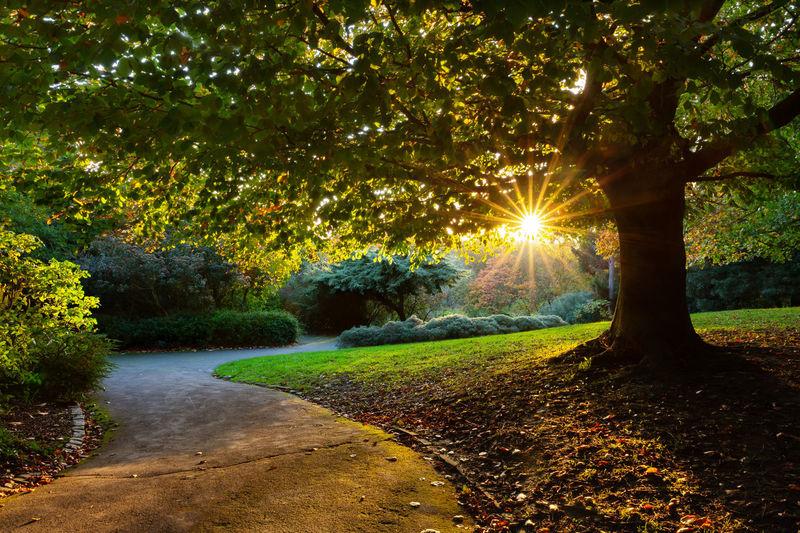 Trees in park against bright sun