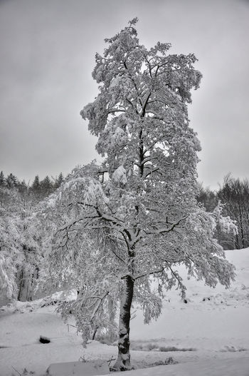 Tree in snow covered land against sky