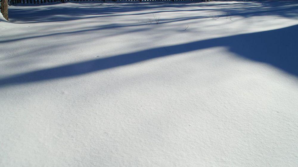 January 2016 Big Snow Backyard Winter Wonderland