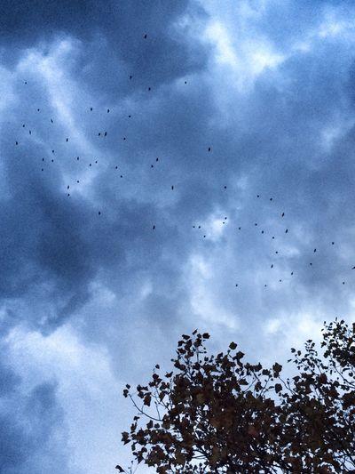 Flyin' Birds in the Storm