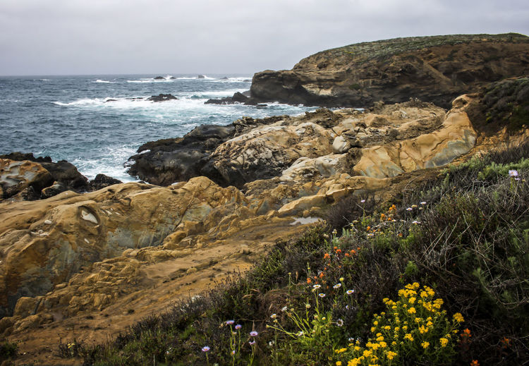 California seascape with spring flowers and layered rock formations. California State Park  State Reserve Point Lobos Carmel Carmel By The Sea Coast Nature Rocks Detail Rock Geology Geologic Formation Seascape Travel Flowers Texture Spring Beautiful Beauty Formations Layer Dramatic Unique Cool Fresh Layers Red Conceptual Shape Yellow Colorful Stone Abstract View Shapes Curves Powerful Background Sea Beauty In Nature Scenics - Nature Horizon Over Water Tranquility Rocky Coastline Rock Formation Tranquil Scene Water Plant