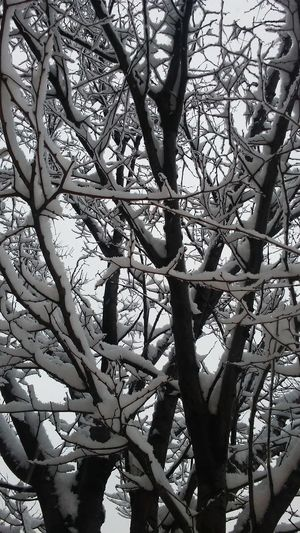 Tree Nature Low Angle View Beauty In Nature Outdoors Upstate New York Snow Snow ❄ Woods Cold Winter ❄⛄ Freezing ❄ Artistic Snowing ❄ Upstatenewyork Upstateny New York Nature_collection Newyork Upstate NY Winter Nature Beautiful Enjoying Life Amazing Theseasons