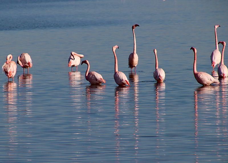 Flamingo's EyeEm Selects Animal Bird Animal Themes Animal Wildlife Animals In The Wild Water Vertebrate Group Of Animals Flamingo Lake Large Group Of Animals Beauty In Nature Nature Pink Color Reflection Flock Of Birds