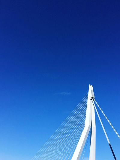 Erasmusbrug Rotterdam Strings Pillar White Bridge Rotterdam Architecture Rotterdam Blue Sky Low Angle View Architecture Built Structure Clear Sky No People Building Exterior Tall - High Modern Day Connection City