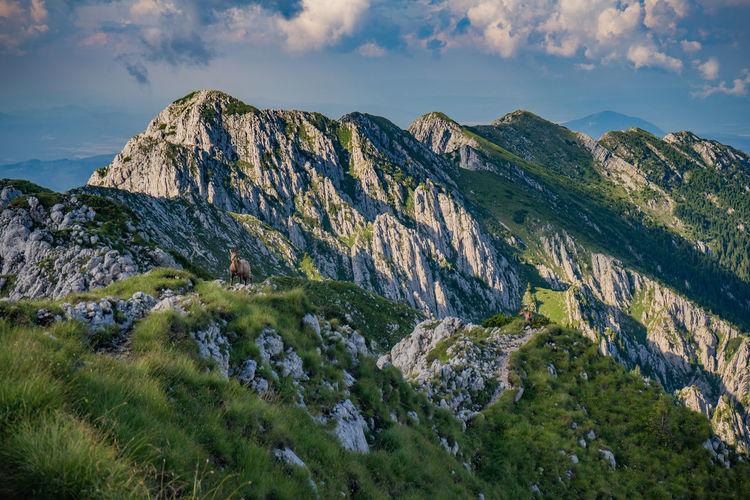 Black goats on mountain peak