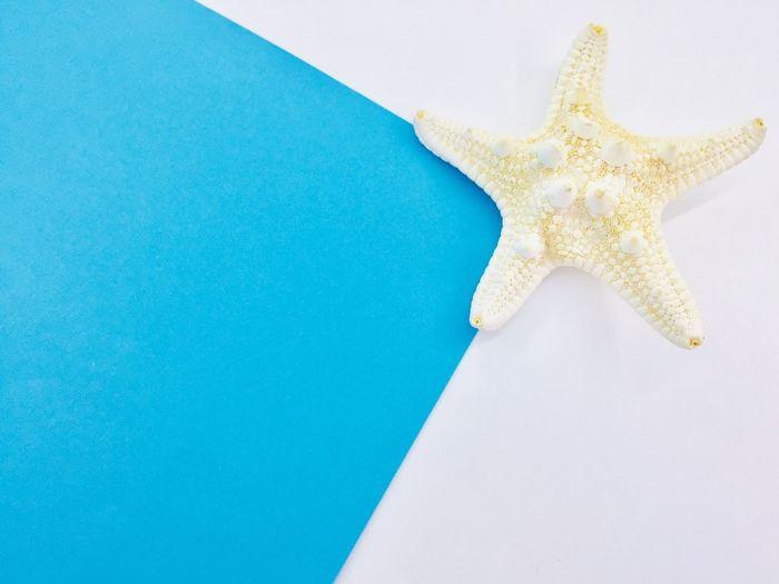 starfish The