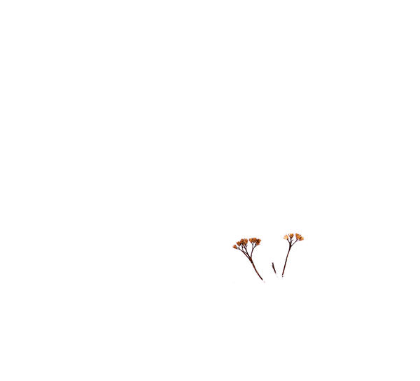 Backgrounds White Background Winter EyeEmNewHere Plant Plants Exceptional Photographs Expression Relaxing Meditation Minimalism Minimal Conceptual Meditation Time Landscape Art Gallery Humor In Nature