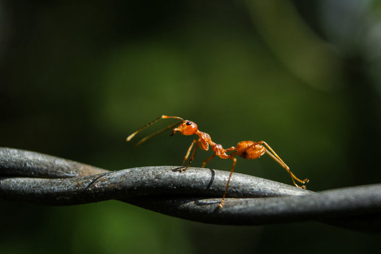Close-up of ant on plant stem