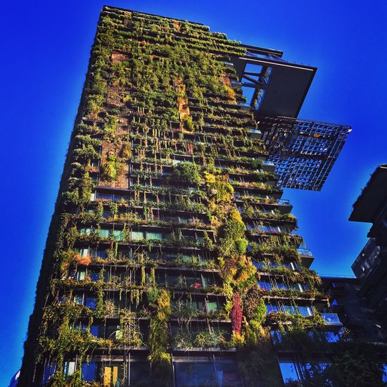 Urban vegetable patch Low Angle View Architecture Built Structure Building Exterior Clear Sky Day Outdoors Blue No People Sky Tree