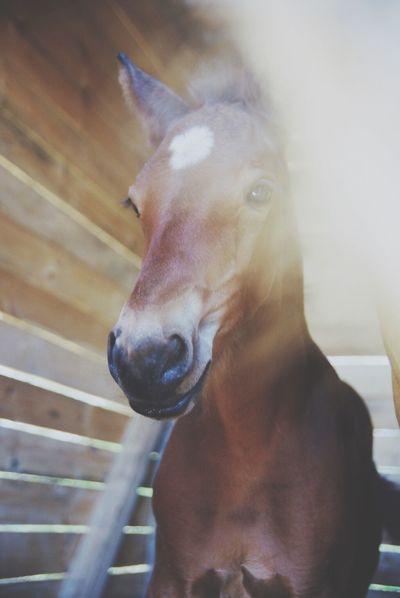 Horse Foals