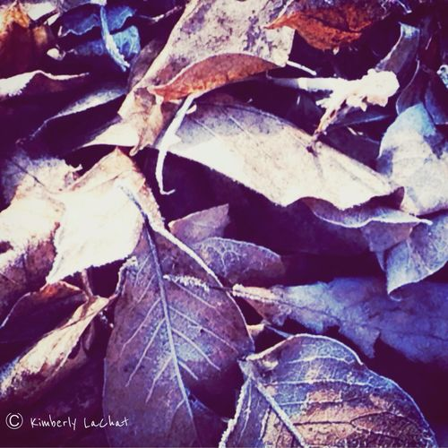 January 2015 Nature EyeEm Nature Lover Tree_collection  Nature Collection Connected With Nature Memories Beautiful Time To Reflect
