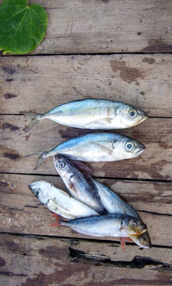 Seafood Fish