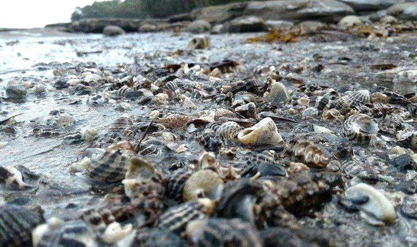Shells Beach Callala Bay First Eyeem Photo