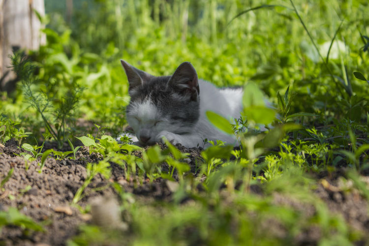 Animal Themes Cat Close-up Day Domestic Animals Domestic Cat Feline Georgia Grass Green Color Leaf Mammal Nature No People One Animal Outdoors Pets Plant Selective Focus Summer