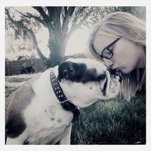 English Bulldog Kiss On The Nose Dog Love