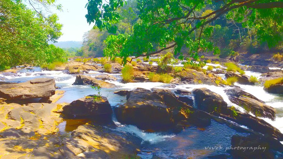 Natural Beauty Tree And Sky Athirappilly Relaxing Vococam Moble Photography Kerala The Gods Own Country ;) Kerala Softlight  Forest Rocks And Water Vscocam Enjoying The Sun Vscocam #vsco