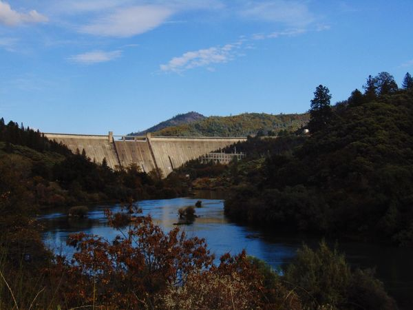 Water Tree Sky Nature River Beauty In Nature Scenics Bridge - Man Made Structure Connection Built Structure No People Shasta Dam Day Outdoors Tranquility Dam Growth Tranquil Scene Mountain Reservoir