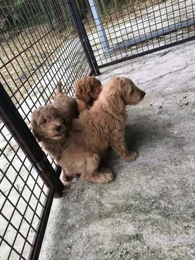 Domestic Animals Mammal Animal Themes Dog Pets Cute Day Cage Puppy Young Animal No People Indoors