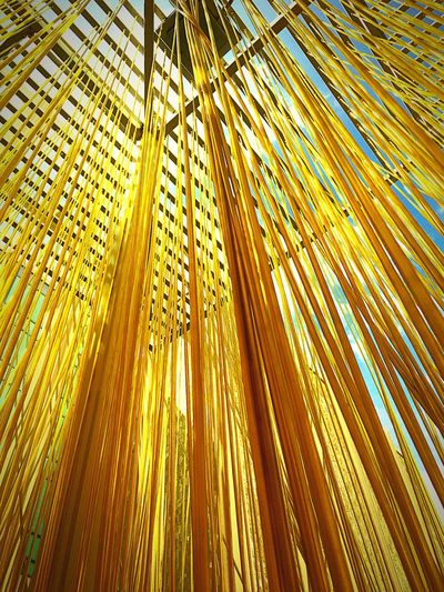 Sky seen through yellow ropes @LACMA, LA