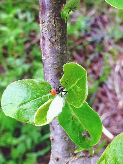Insect Insects  Leaf Green Color Nature Close-up Focus On Foreground Day Plant No People Outdoors Fragility Growth Beauty In Nature Perching Tree Grass Beautiful Taking Photos Photography The Beauty Of Everyday Things Branches Small Small And Swift Bug