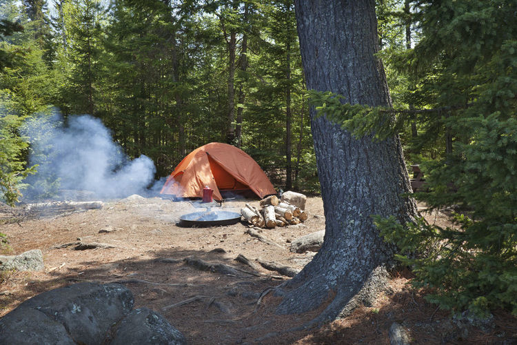 Campsite with orange tent and fire set among pines in the northern Minnesota wilderness Camping Campsite Camp Minnesota Boundary Waters Tent Fire Trees Pines Wilderness Forest Fire Pit Campfire Logs Grill Coffee Pot Rocks Recreation  Adventure Lantern Excursion Equipment Green Orange Outdoors Activity Landscape Nature Leisure Color Image Photography Sunlight Shadow Superior National Forest Homer Lake USA