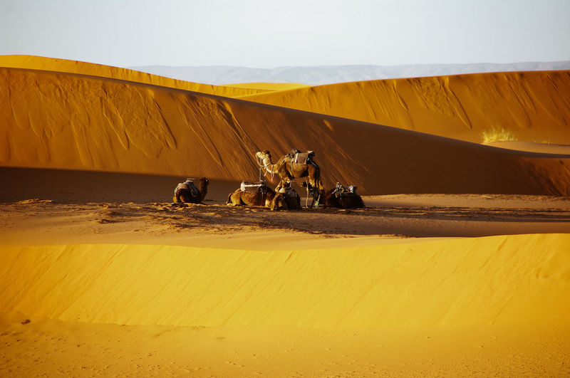 View of a horse cart in desert