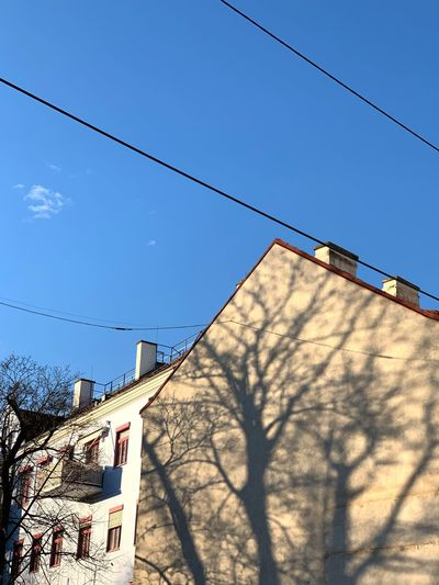 Shadows of trees on walls of houses Urban Sky Built Structure Architecture Nature Low Angle View Building Exterior Blue Cable Shadow Sunny Tree Building