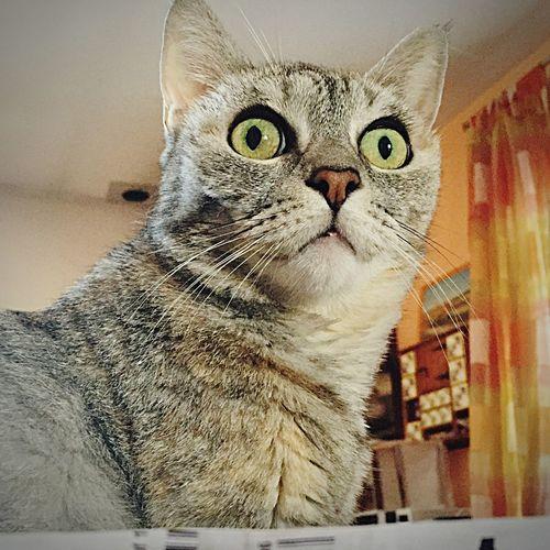 Cat spaventato Earthquake Bad Day Pensiero :la terra a volte ci fa del male ma niente in confronto a quello che facciamo noi a madre terra,con buona pace a chi ci ha lasciato che la terra sicuramente la amavano! Perugia