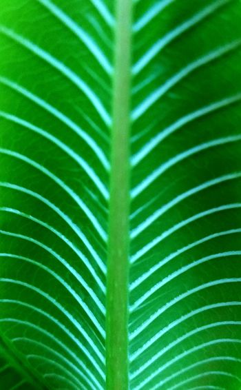 Growth Growth Leaf Green Color Nature Palm Leaf Day Freshness Close-up Frond No People Backgrounds Beauty In Nature Outdoors Fragility Palm Tree