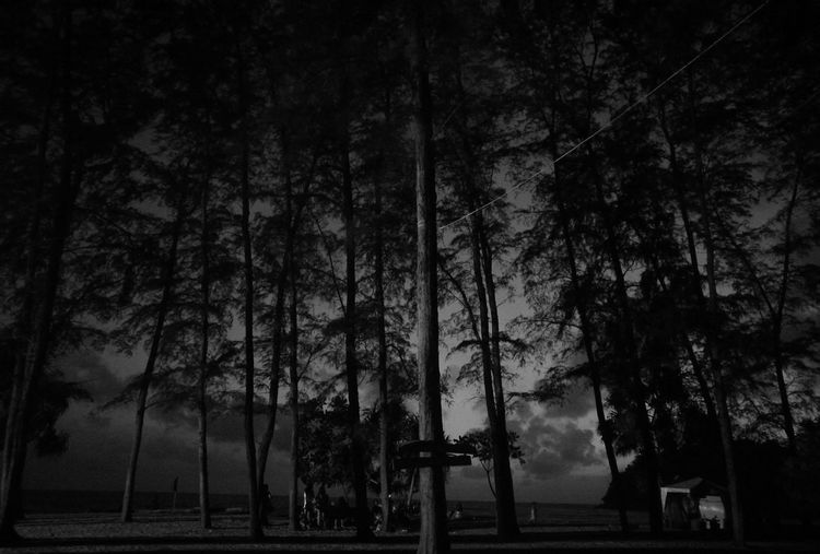 Beach Blackandwhite Tree First Eyeem Photo