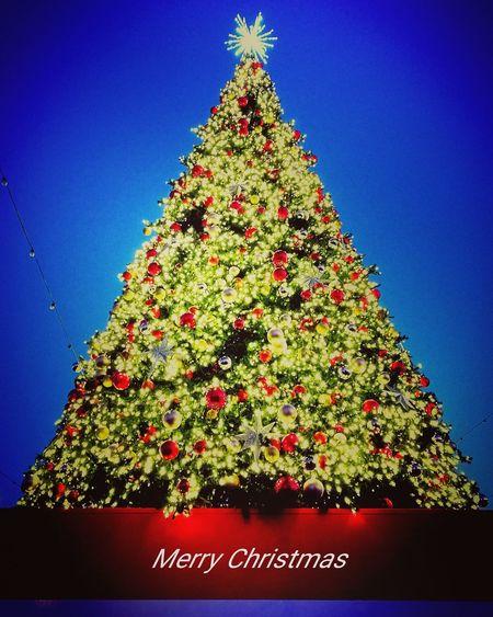 Christmas Tree Brightly Lit Celebration Illuminated Trees Lights Christmas Christmas Tree Christmas Decoration Tree Tradition Holiday - Event