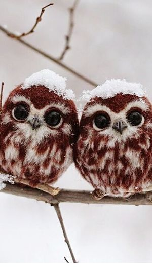 Owl Owls Owl Art OWL Shoot Owl Pair Pair Of Birds Owl Love Owl Lovers Owl Looking Nature_collection Nature Narure Nature Photography Nature Birds Eyeem Nature Lover Nature Bird Photography Nature Owl