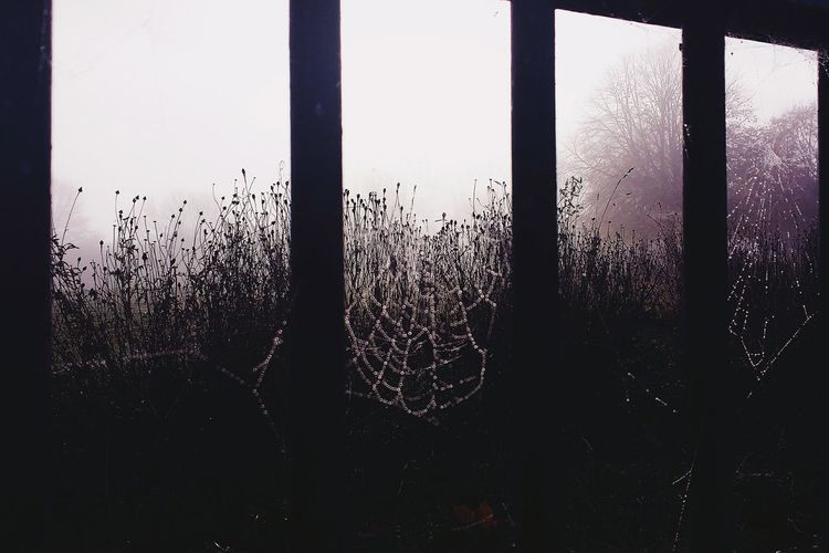 Spider Webs 🕸