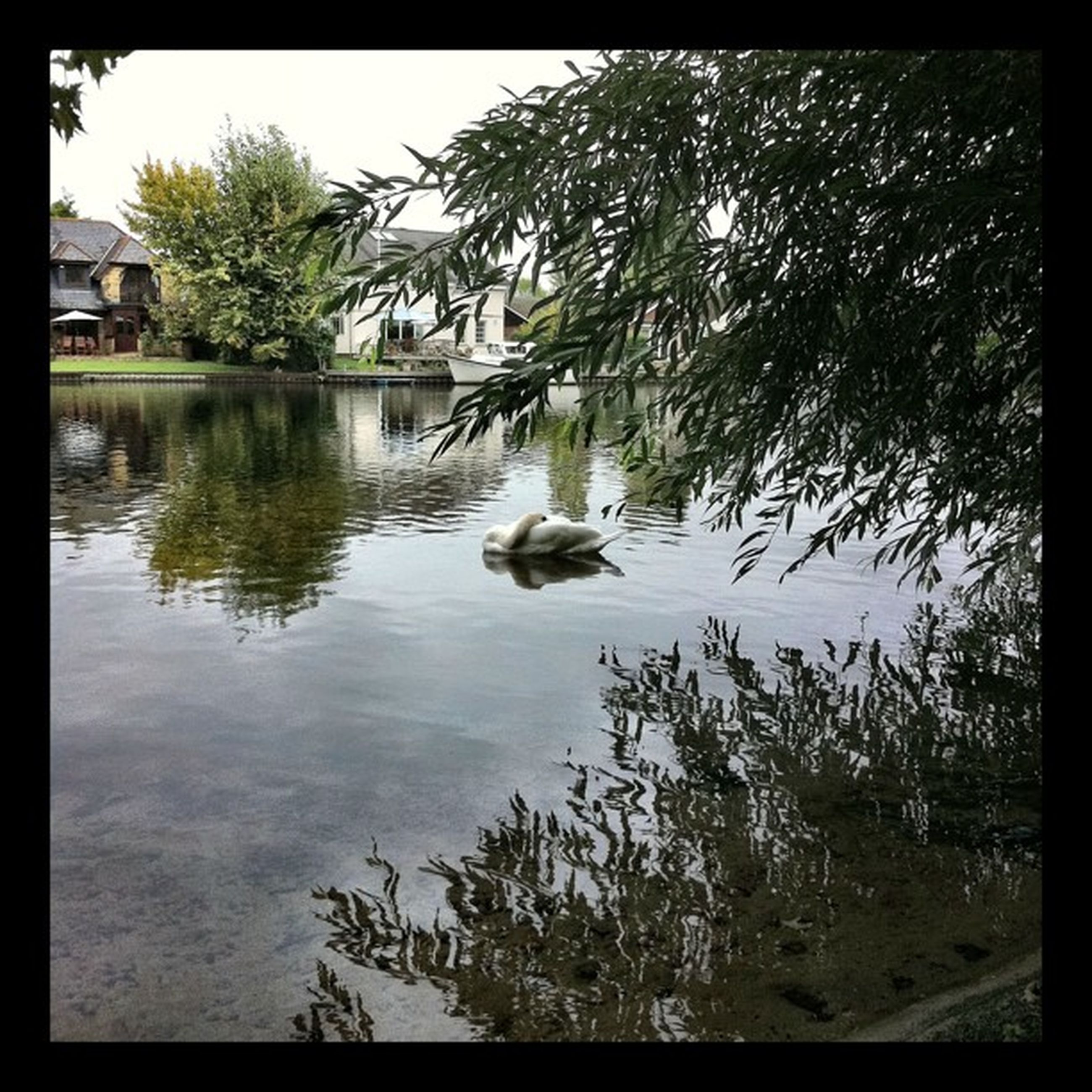 transfer print, auto post production filter, animal themes, bird, water, tree, wildlife, one animal, animals in the wild, lake, reflection, nature, pond, river, day, waterfront, swimming, outdoors, plant, duck