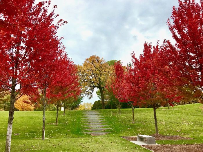 Autumn Autumn Colors Autumn Stair Beauty In Nature Change Cloud - Sky Day Flower Grass Growth Landscape Nature No People Outdoors Park - Man Made Space Scenics Sky Stairway To Heaven Stairway To Light Stairways On Autumn Tranquil Scene Tranquility Tree