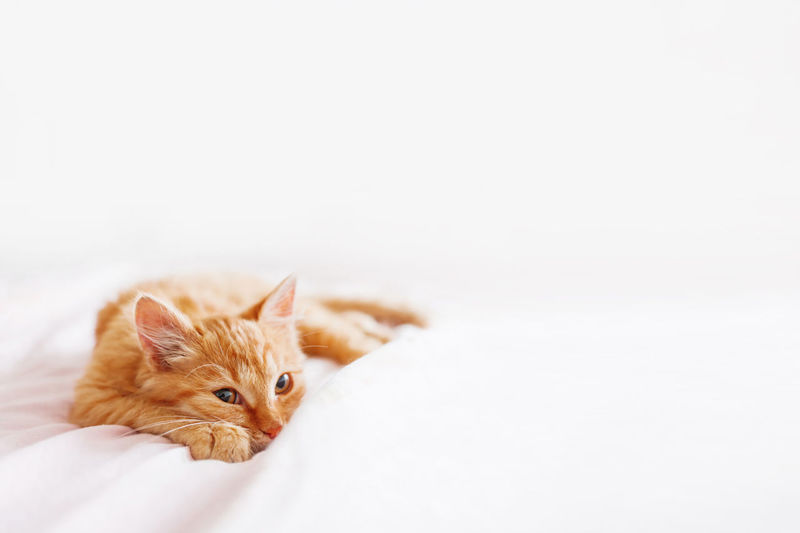 Cat looking away over white background