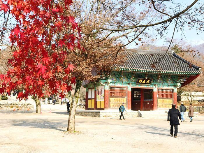 Tree Temple Winter